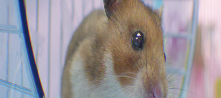 hamster-screen-3